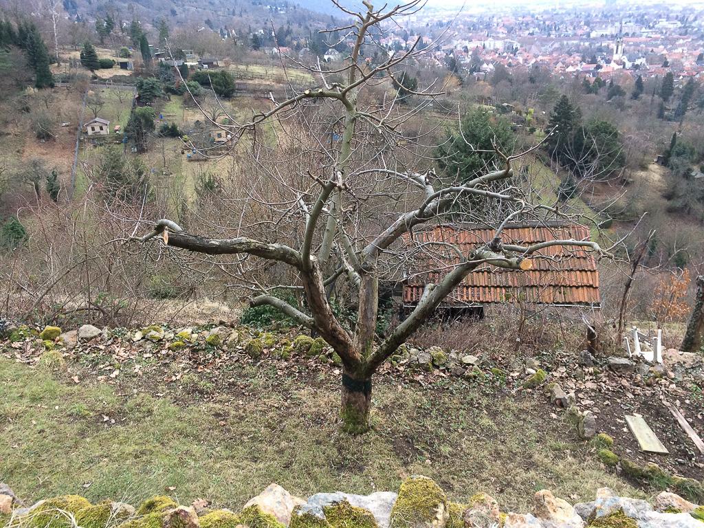Apfelbaum in den Winters kalten Tagen